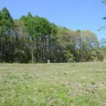 敷地南西側より北東方向を撮影。北側の林は保安林のため伐採できず、環境が変わりません。