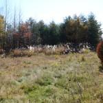 敷地北西側から南方向を撮影。