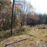 敷地北側から南方向を撮影。敷地西側は平坦な草地。東側は林の傾斜地。