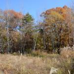 敷地南西側から東方向を撮影。敷地東側は広葉樹中心の林。