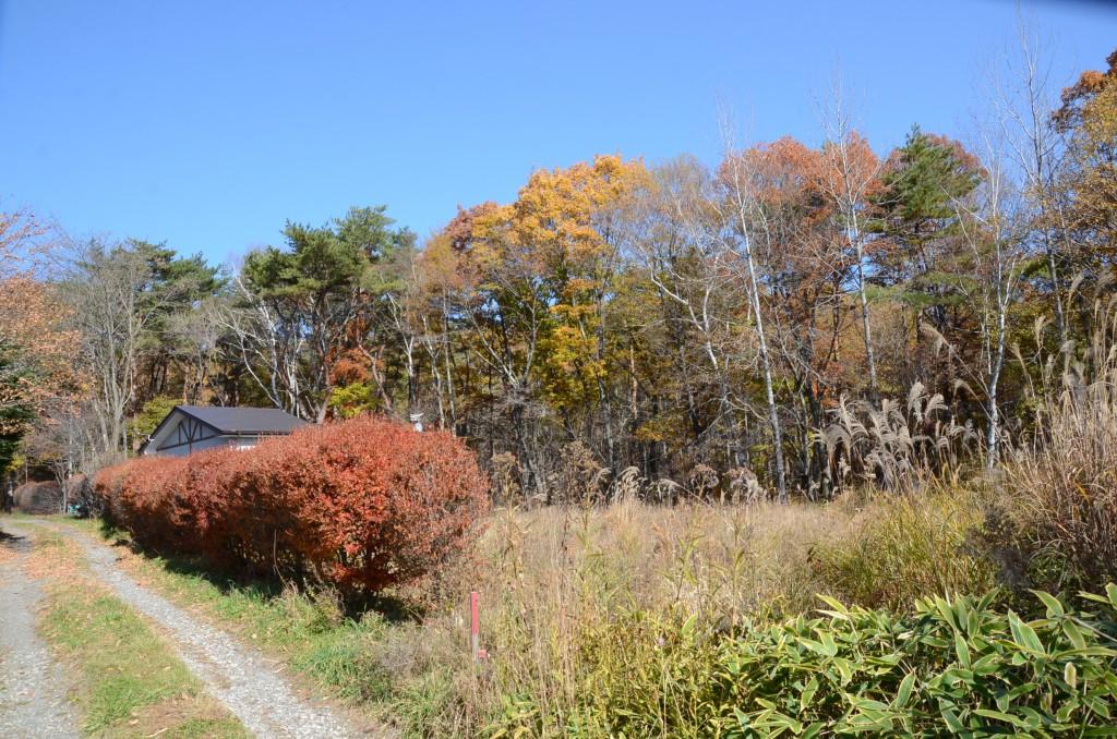 物件南西側から北東方向を撮影。敷地西側公道に沿ってドウダンツツジが植えられている。