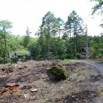 敷地北東側から南西方向を撮影。敷地は道路左側の伐採された部分。