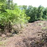 敷地北東側から南方向を撮影。左側の林との境に小川の流れあり。