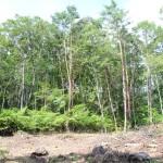 敷地南西側から北方向を撮影。敷地北側は主に広葉樹の林。