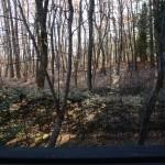 物件西側の広々した林の風景。