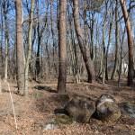 敷地中央付近から東方向を撮影。