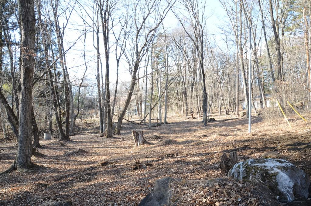 敷地南西側から北方向を撮影。左側境界線に沿って小川の流れあり。