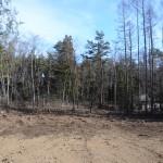 物件中央付近から東方向を撮影。伐採抜根された部分までが敷地。
