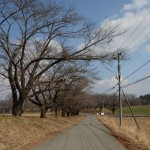 蕪の桜並木。西側から東方向を撮影。