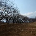 徒歩15分の名所、蕪の桜並木。西方向に南アルプスの眺望。