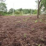 敷地北東側から西方向を撮影。敷地は伐採された部分。西側の道路方向へ小高くなっている。