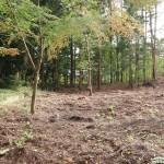 敷地東側から南西方向を撮影。敷地は樹木が伐採された部分。