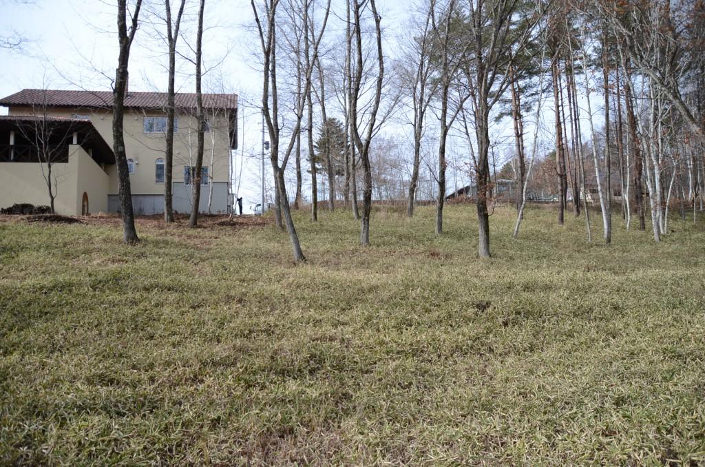物件東南側から西方向を撮影。手前中央から前方別荘の右端が敷地南側の境界。地面は低い笹で覆われ、夏でも自由に歩けます。草むしりの心配がありません。