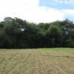 敷地北側から南方向を撮影。敷地南側は一段下がった林。