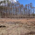 敷地南側から北方向を撮影。林の手前までが敷地。