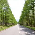 別荘地内幹線道路。八ヶ岳高原ロッジ付近から別荘地入口方向を撮影。道路脇の芝生も綺麗に管理されています。