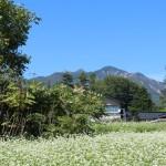 リビング北側窓からの眺め。蕎麦畑と八ヶ岳の眺望。