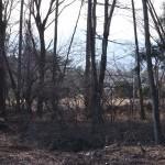 敷地中央付近から南西方向を撮影。南アルプスの稜線を眺望。