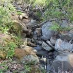 敷地西側に沿った小川。