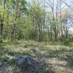敷地北側から北方向を撮影。敷地の北側は林。