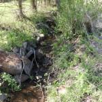 物件南西側の小川の様子。整備すれば趣のある小川になります。