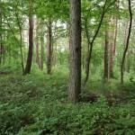 物件南側の林の様子。
