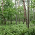 物件中央付近の林の様子。