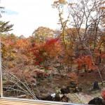 リビングから南方向の庭の眺め