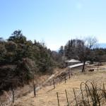 ウッドデッキから南西方向の眺め。左側林の下に水路の流れ。