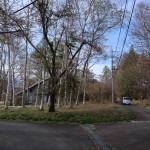 物件東南側から北方向を撮影。白樺林部分が物件。
