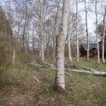 敷地北西側から東方向を撮影。敷地内の白樺林は近々伐採の予定。
